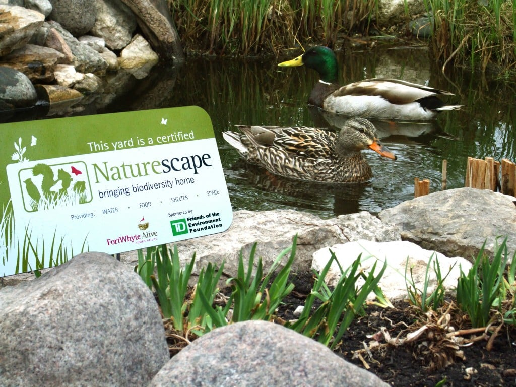 NS Sign with Ducks in FW Garden