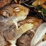 Hibernating/Torpor