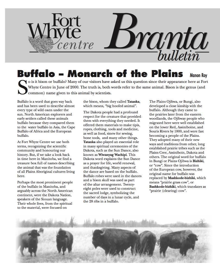 Branta-Bison