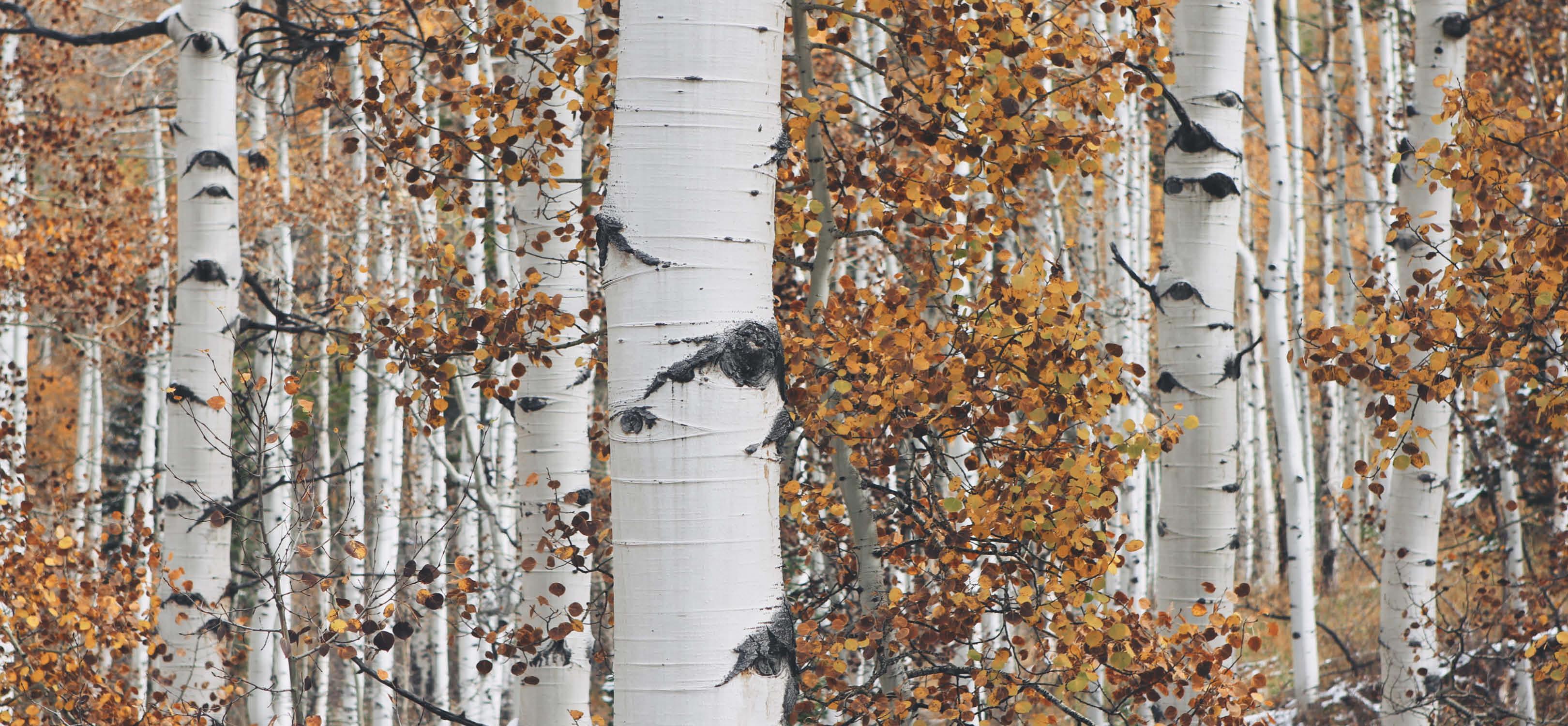 Tree Health Workshop