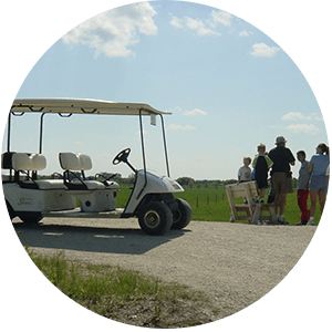 Guided Buggy Tours
