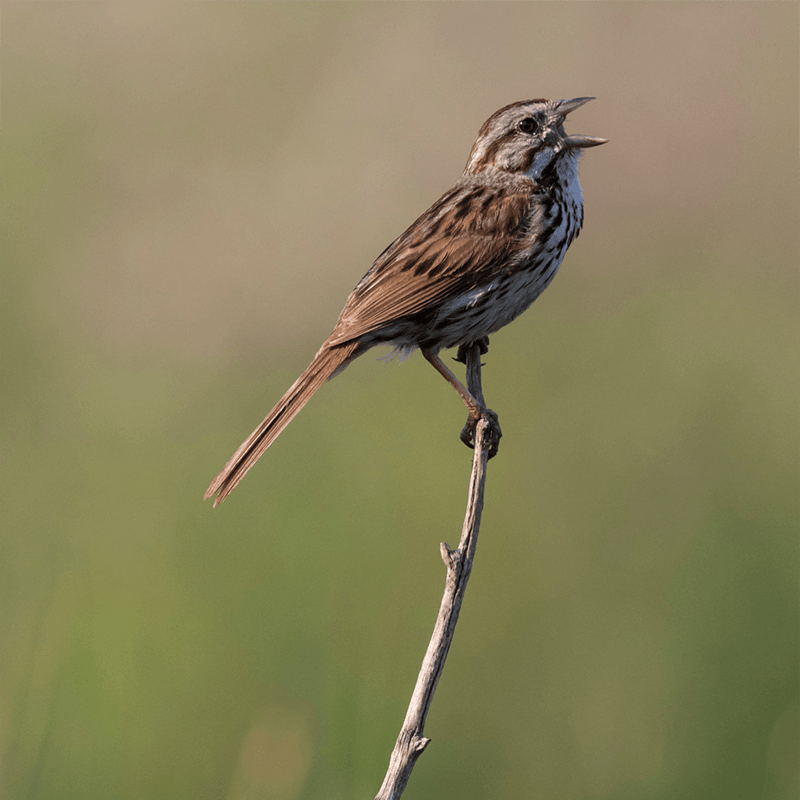 Introduction to Bird Photography