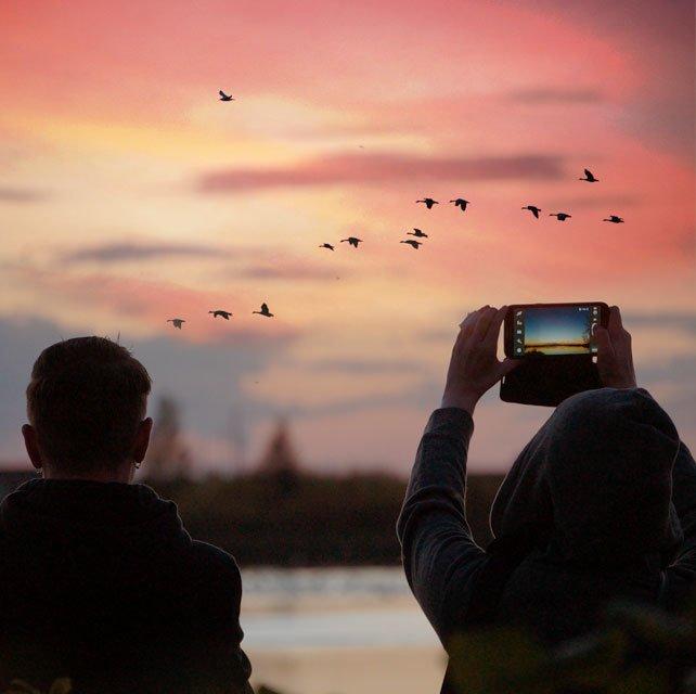 Sunset Goose Flights