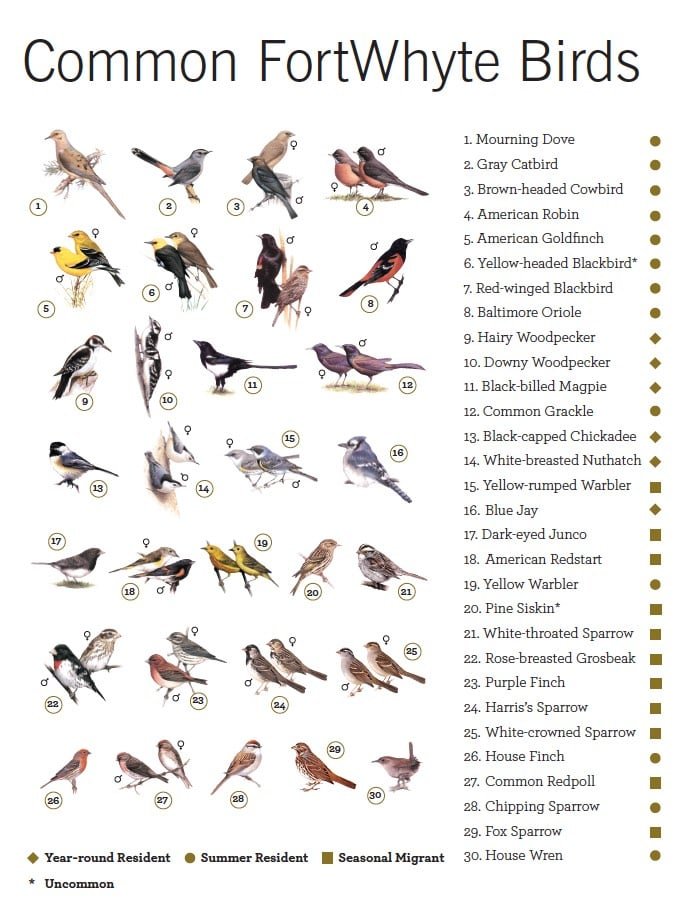 Common FortWhyte Birds Guide