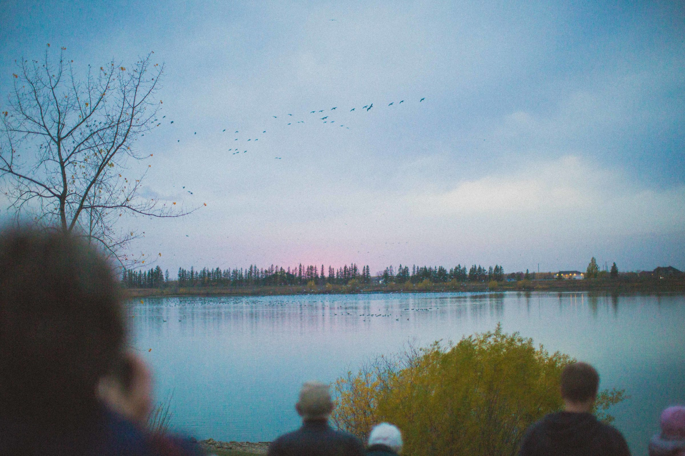 A group of visitors take in fall migration as birds descend on the lake at sunset.