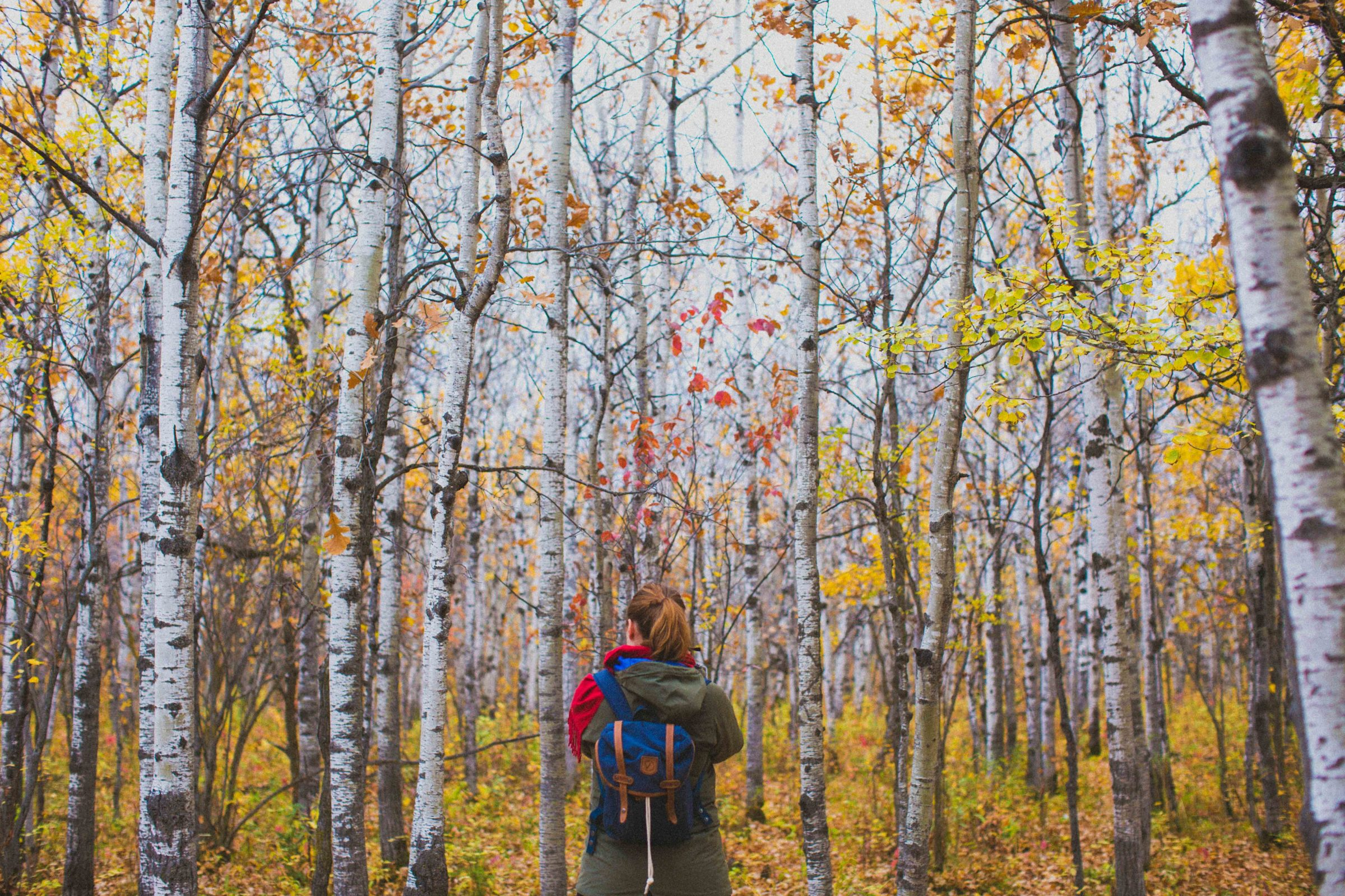 Visitor facing colourful fall forest.
