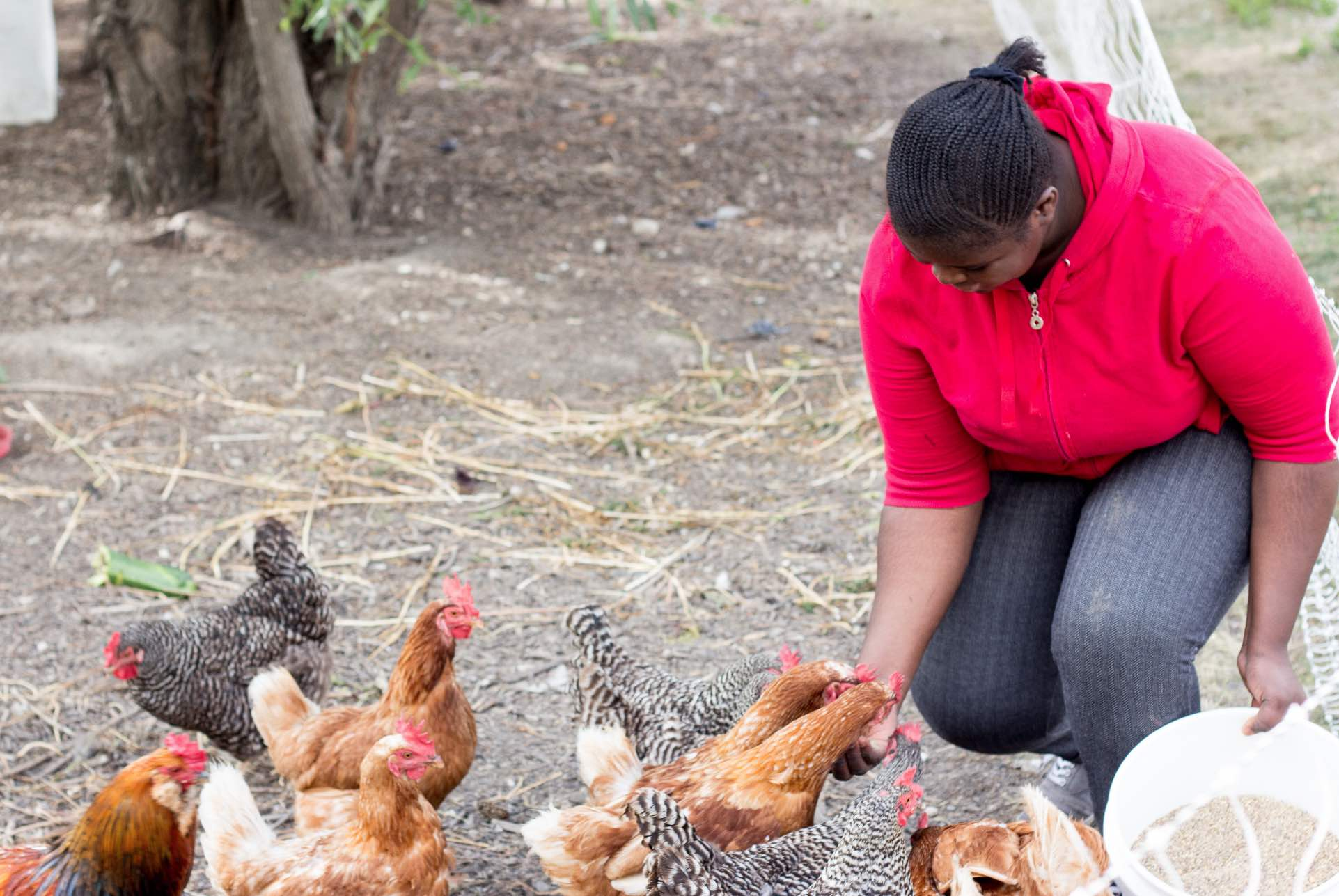 Youth leaning down to feed flock of chickens