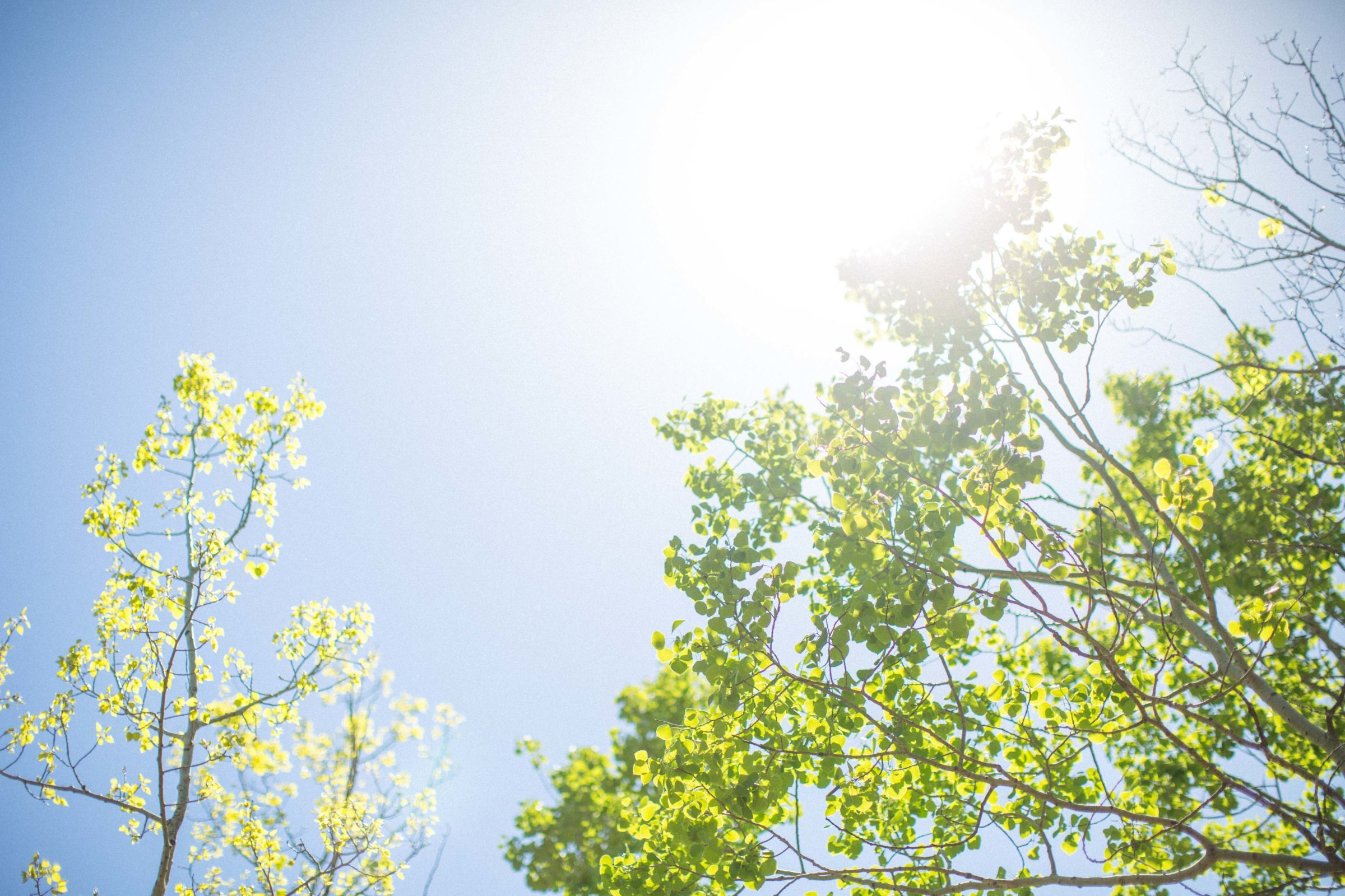 Clear blue sky and sun shine through green leaves