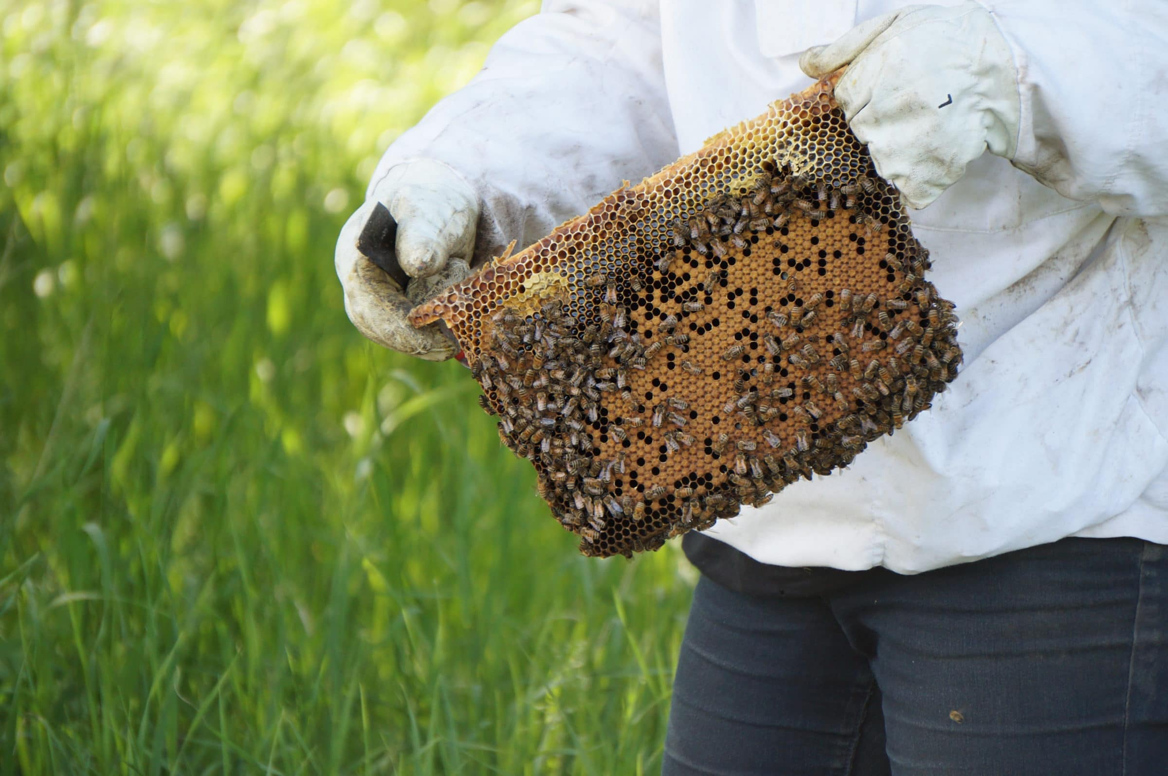 A beekeeper holds up an active beehive.