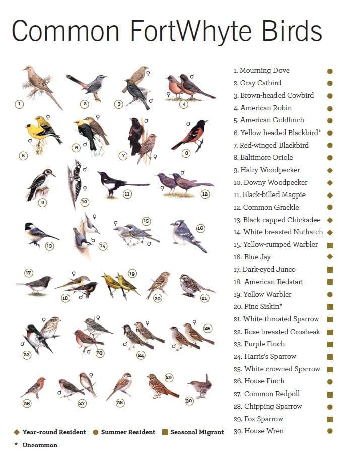 Guide of various Manitoban birds