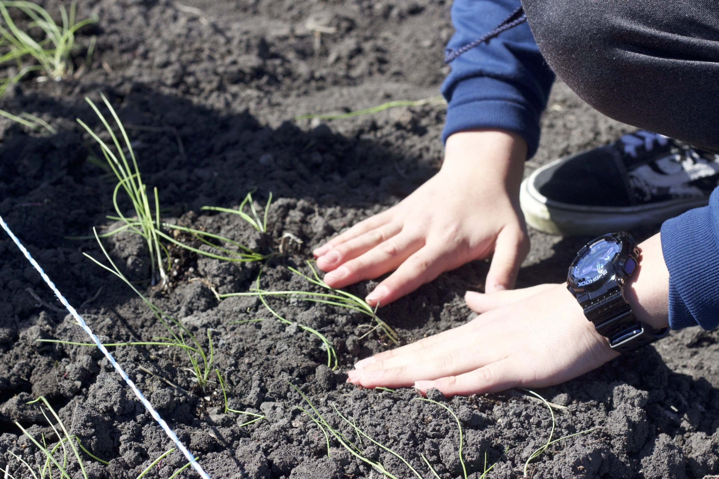 Hands packing soil down around a new plant