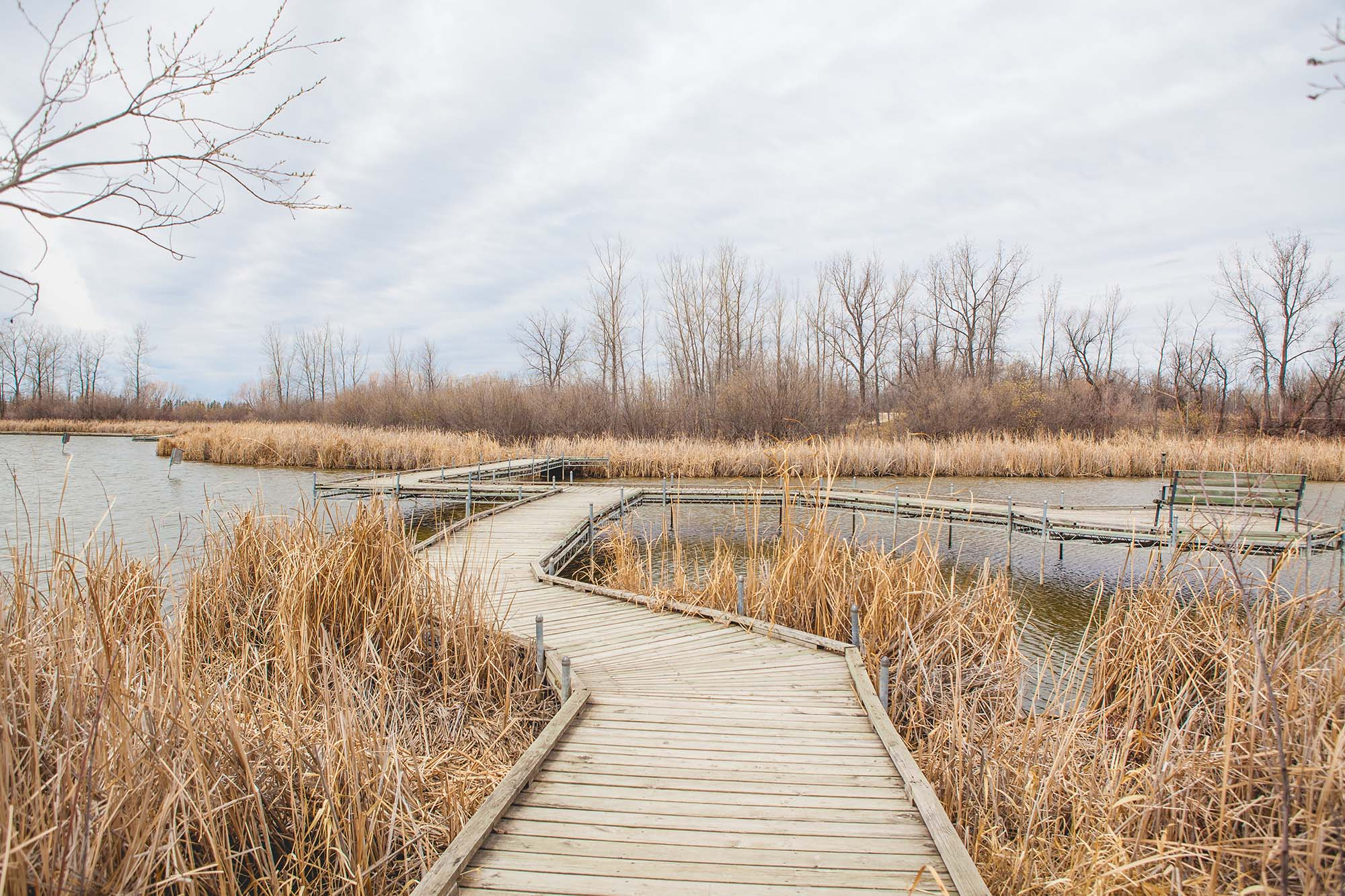 FortWhyte Alive's boardwalk surrounded by wetlands in the spring