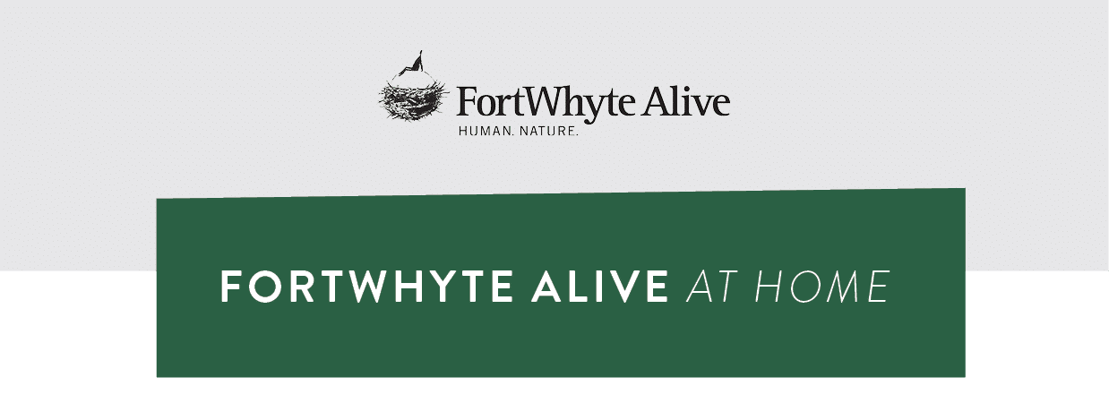 FortWhyte Alive at Home banner image