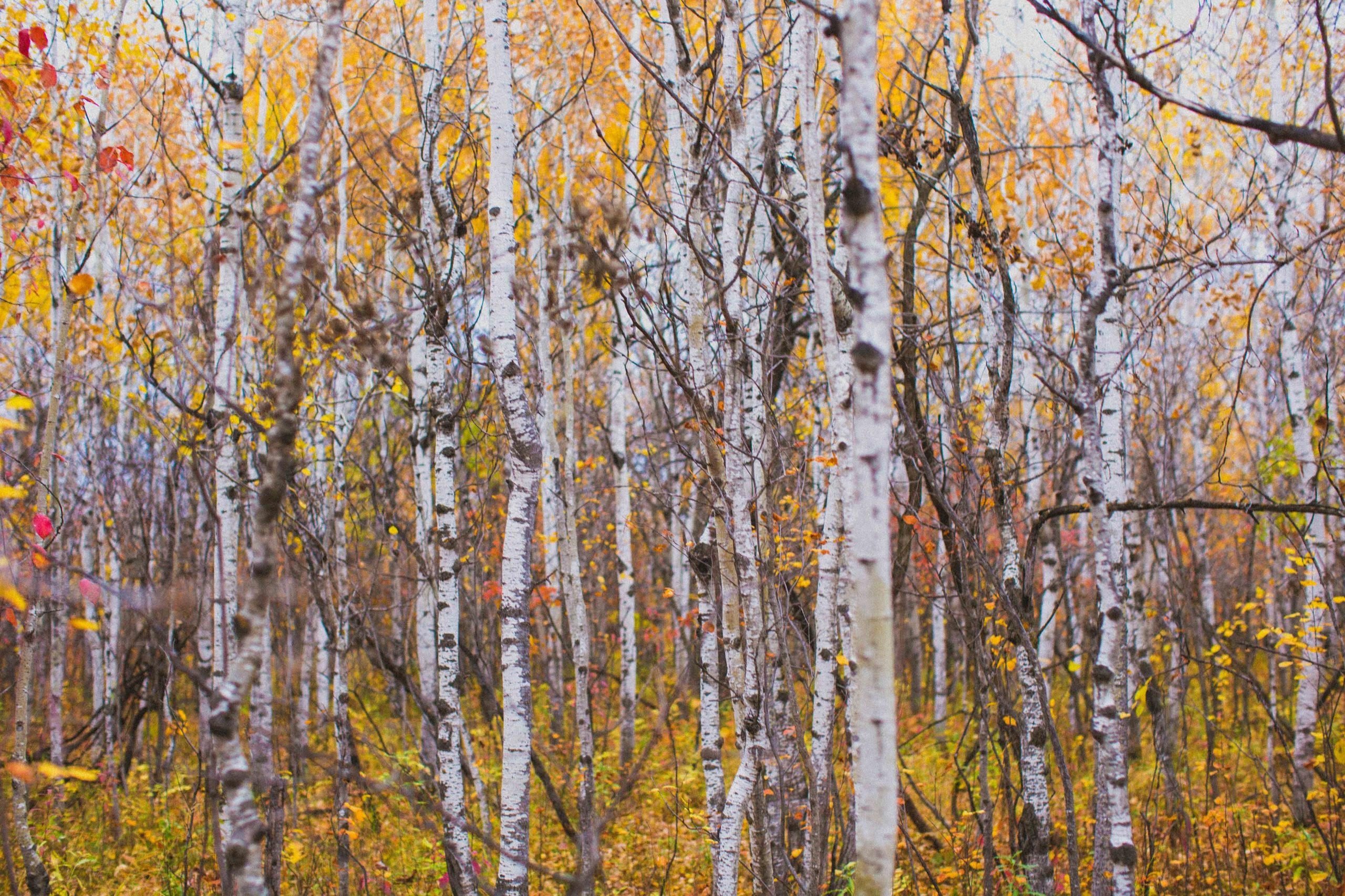 An autumn forest with yellow and orange leaves