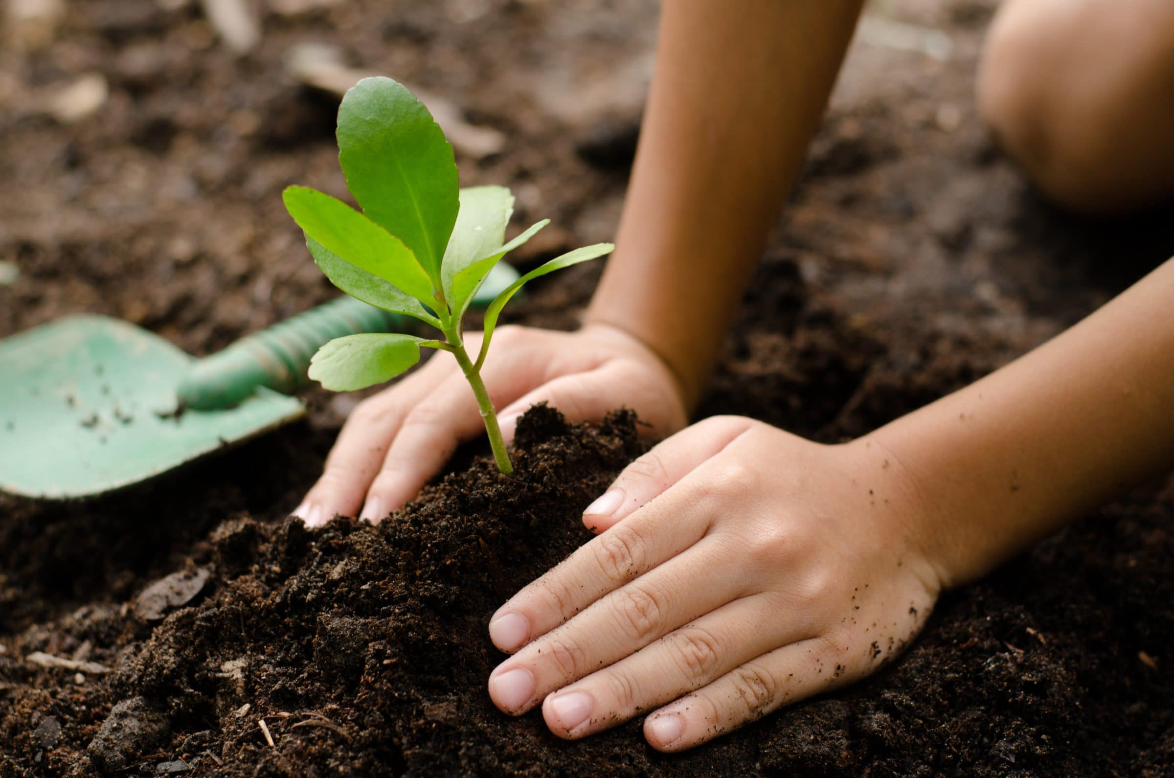 Two hands press into the dirt on either side of a small green plant