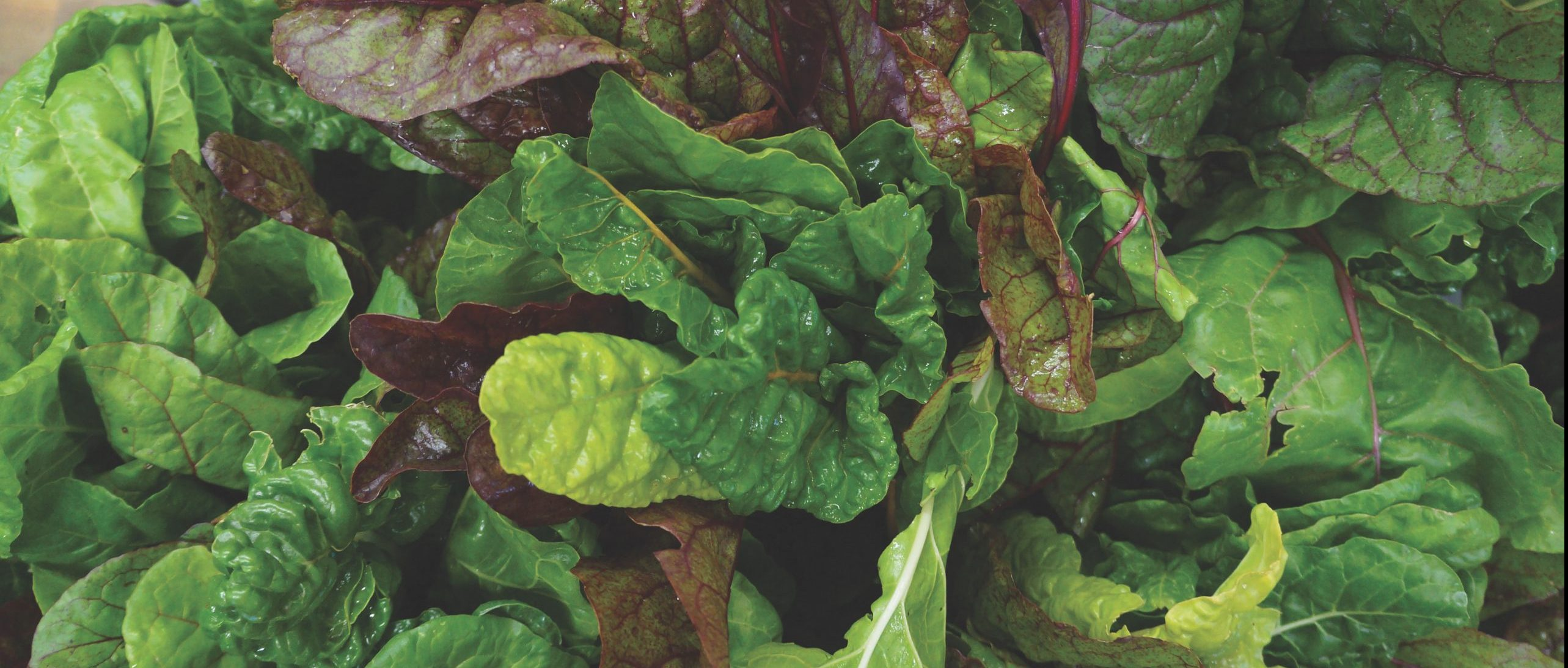 Close up of leafy greens