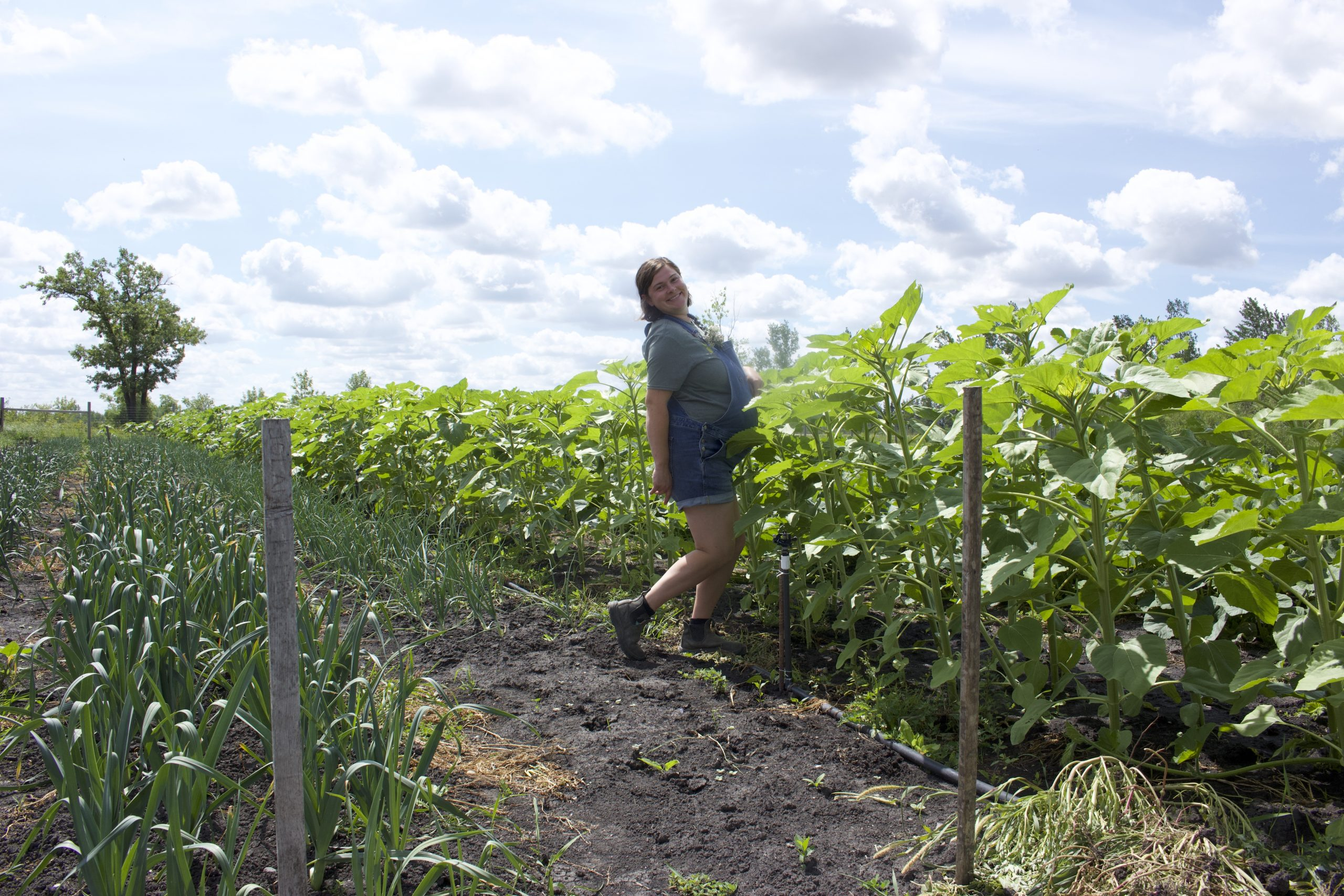 Heather stands in a field of soon-to-bloom sunflowers