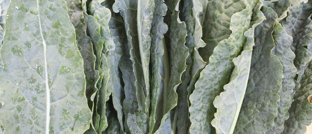Heads of lettuce side by side