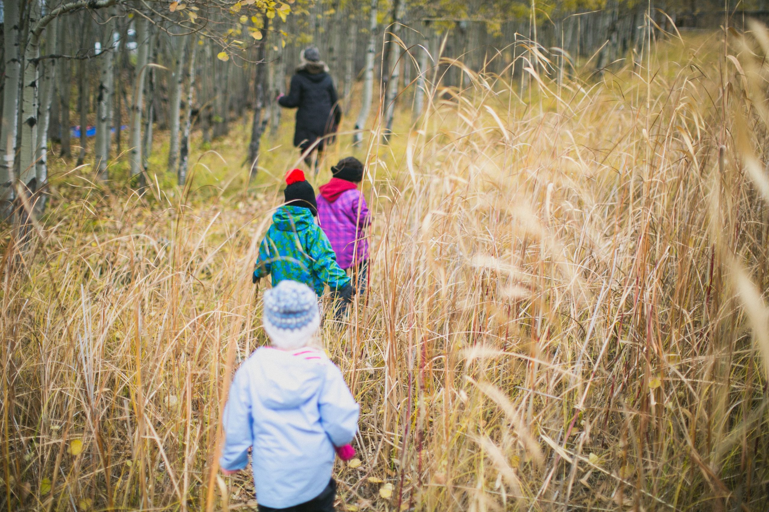 Children walk in a line between tall grass in autumn