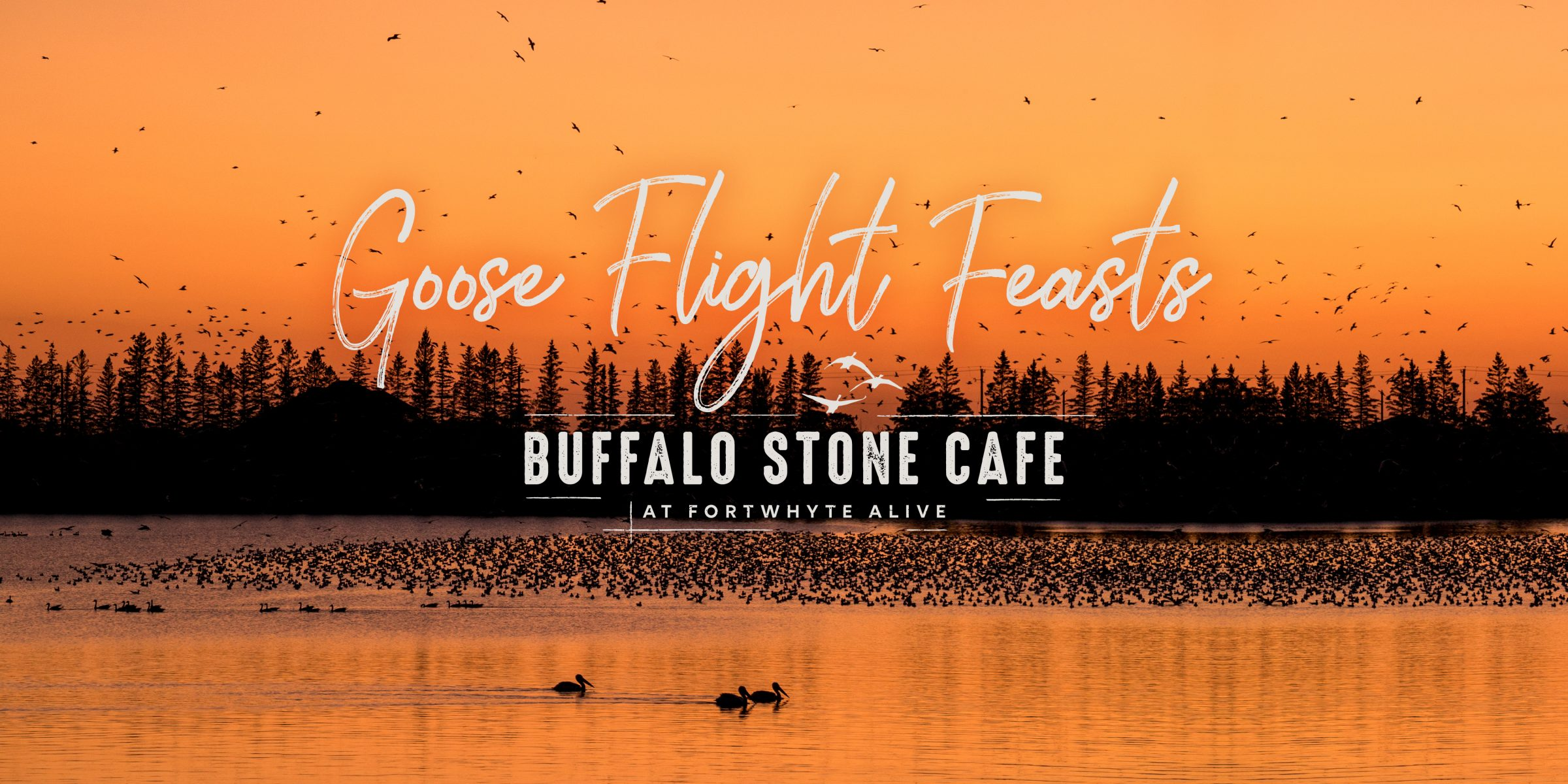 Goose Flight Feasts Buffalo Stone Cafe text on a photo of an orange sunset with silhouettes of geese landing on water.