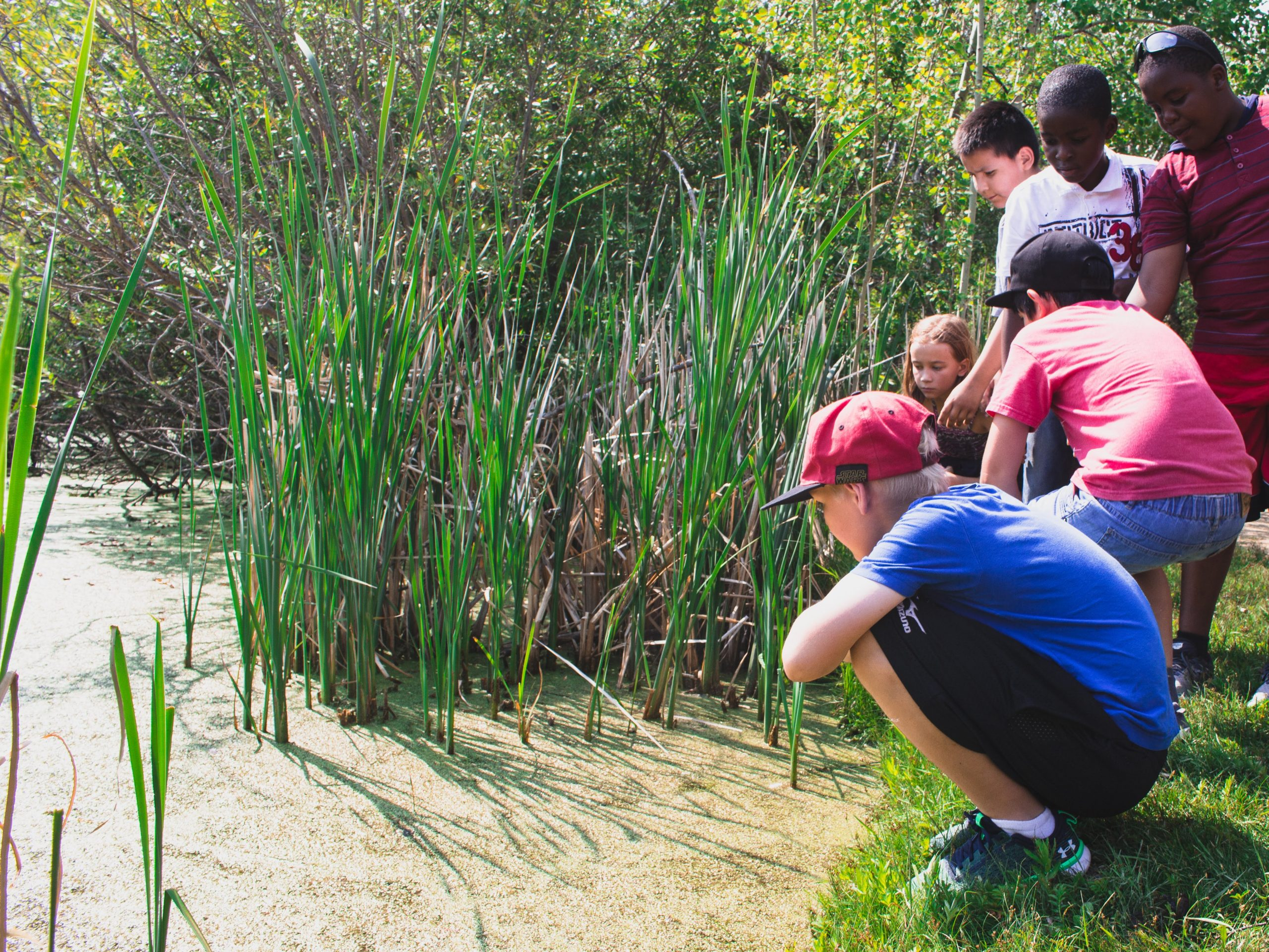 Students gather on the edge of a marsh and inspect the water.