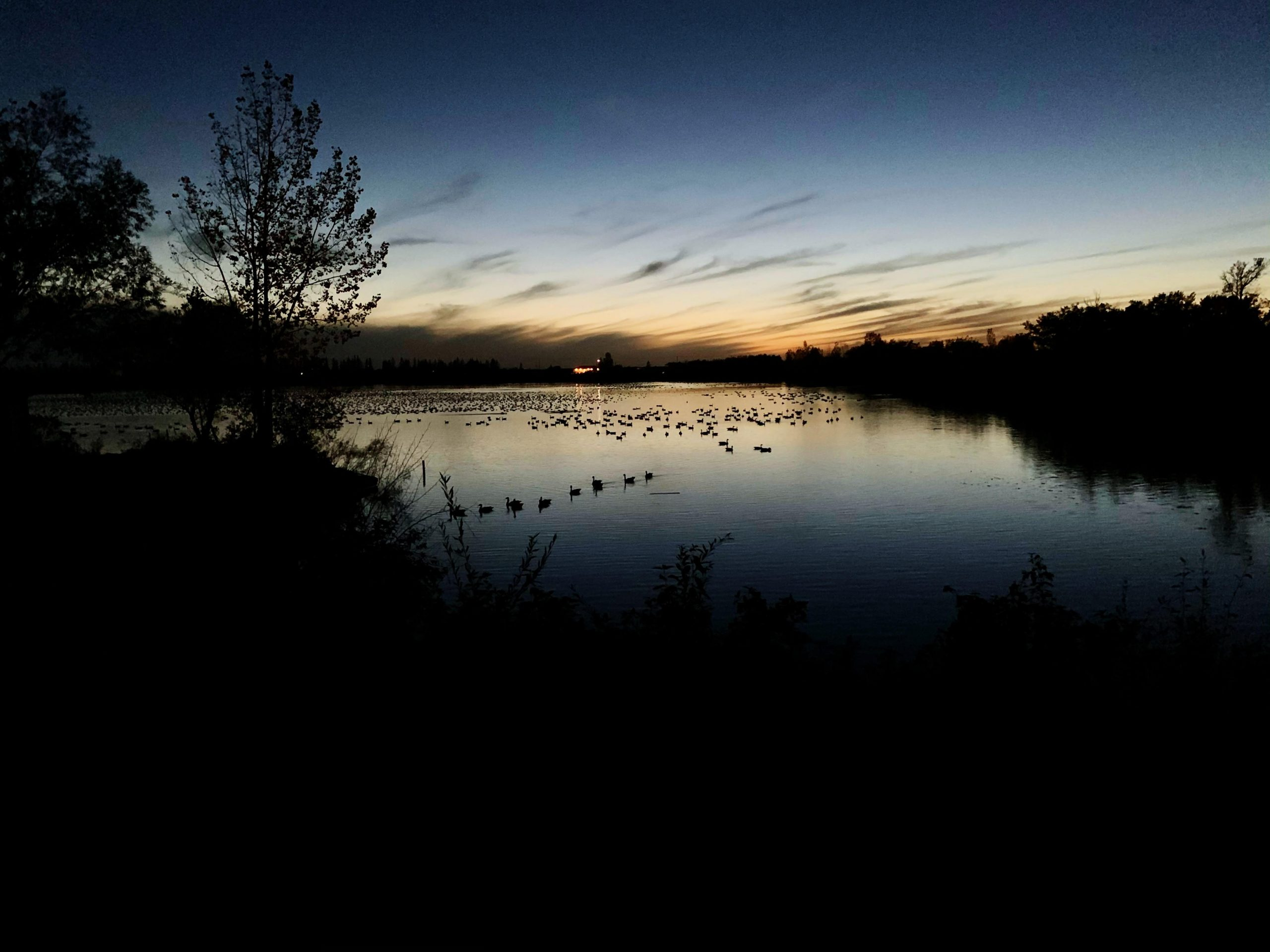 The sky and water are deep blue and black, with whisps of cloud showing in what is left of the sunset. A couple dozen geese sit on the lake.