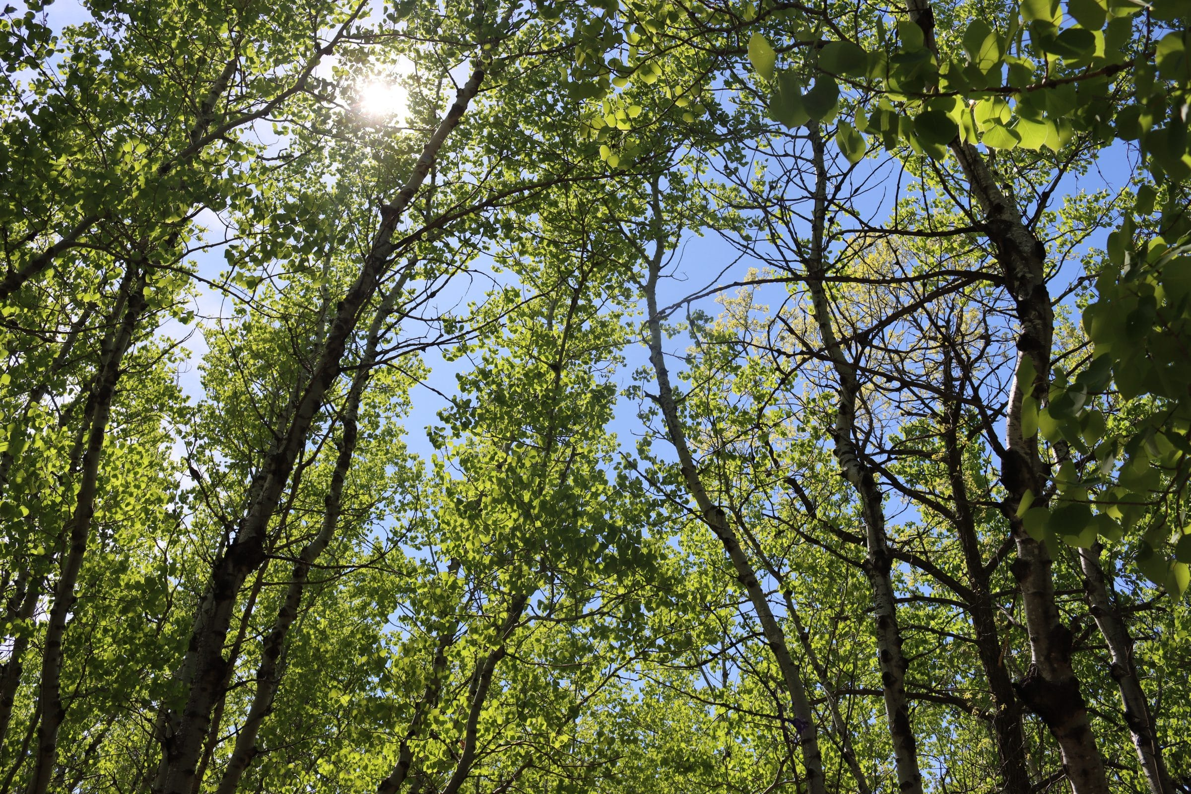 A blue sky and sunshine peeks through leafy green trees in a forest.