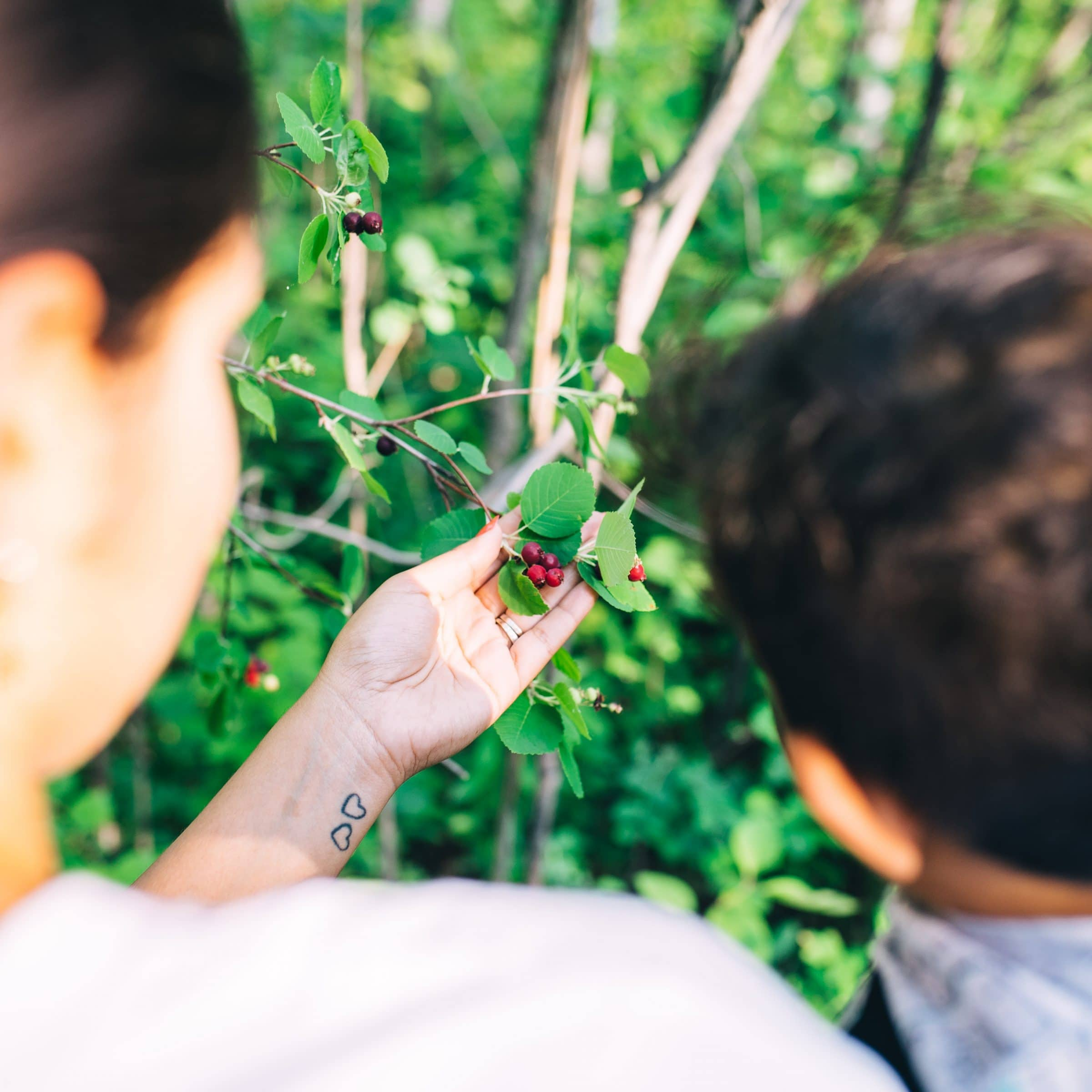 An adult and child closely examine a red berry on a green leafy plant.